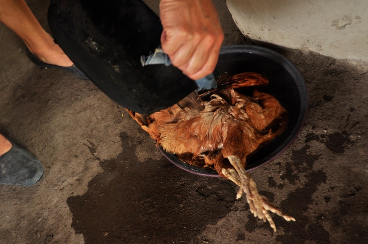 "The smell that comes off the chicken when you pour the boiling water over it is a bit like that ""wet dog"" smell..."